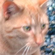 I går etterspurte vi et navn på Krokhol-katten, og nå har den fått ett. Til ære for den første som han representerte under en premieutdeling har katten nå fått navnet Lars. Tom Rune synes dette er fint, for da blir hele navnet Lars Larsen. Siden Holger Kohagen hadde gått hjem før premieutdelingen, lar vi katten Lars også representere ham.