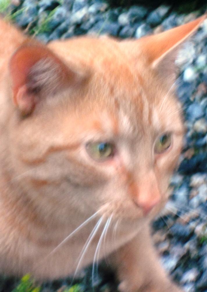 2013-08-12-07 Katten Lars